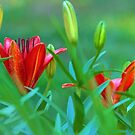 Asian Lilies by Eileen McVey