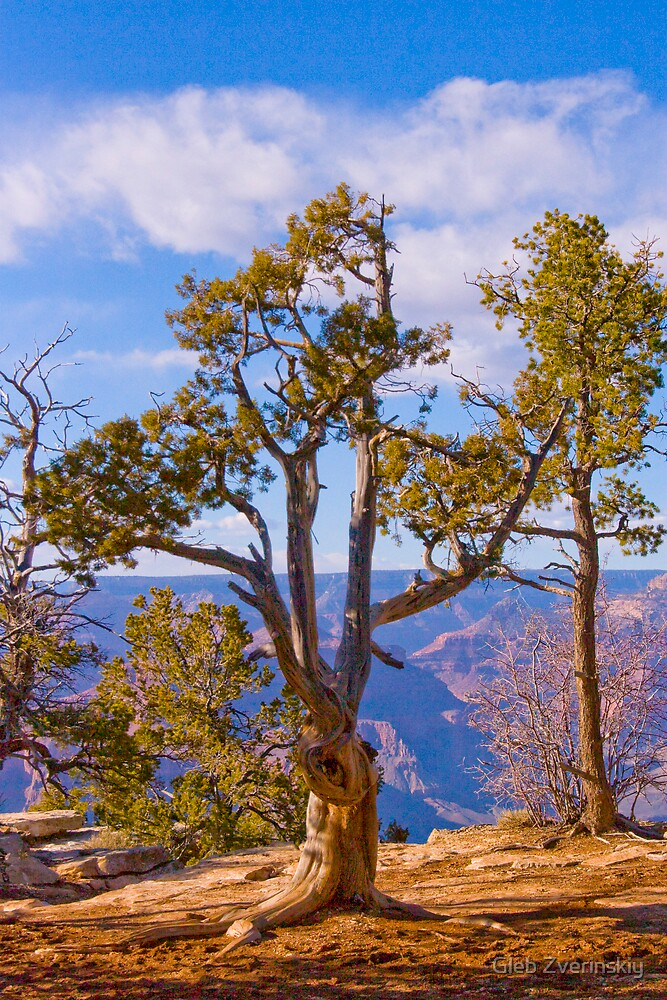Heavy Processing of a Tree at Grand Canyon by Gleb Zverinskiy