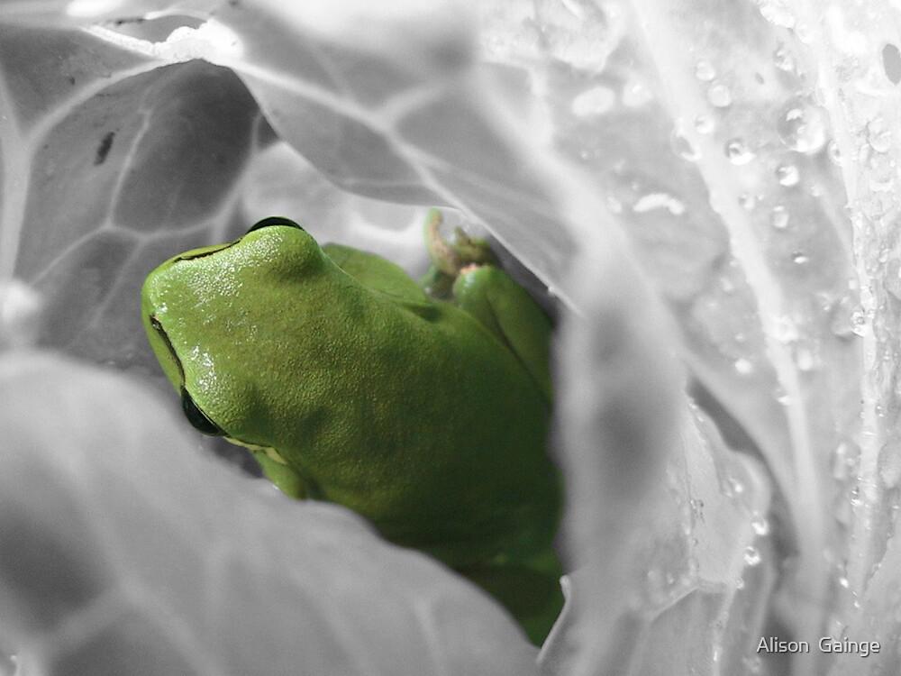 B&W Frog by Alison  Gainge