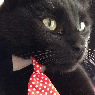 Rufus in a tie (Black Cat) by jeremydwilliams