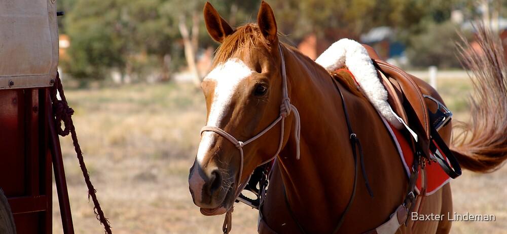 Equine Interest  by Baxter Lindeman