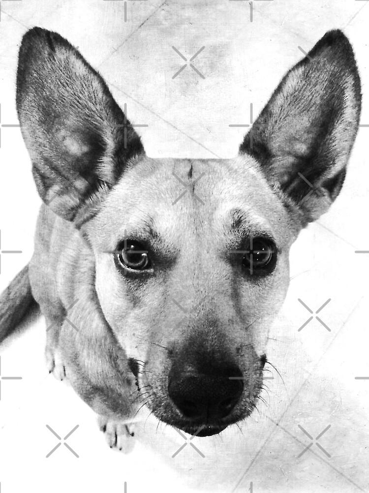Carolina Dog Gray Pup - American Dingo by OneDayArt