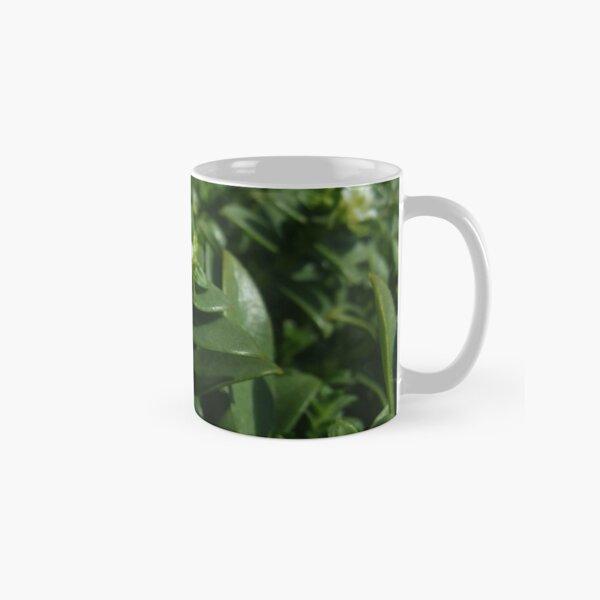 Sea Sandwort (Honckenya peploides) Classic Mug
