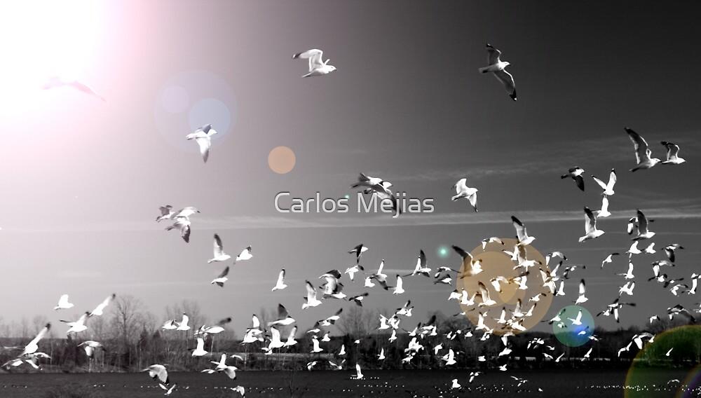 BIRDS! by Carlos Mejias