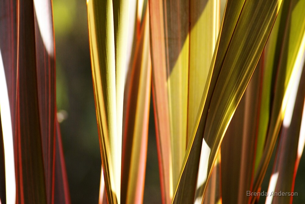 sunlit flax by Brenda Anderson