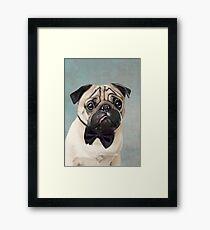 Mr Pug Framed Print