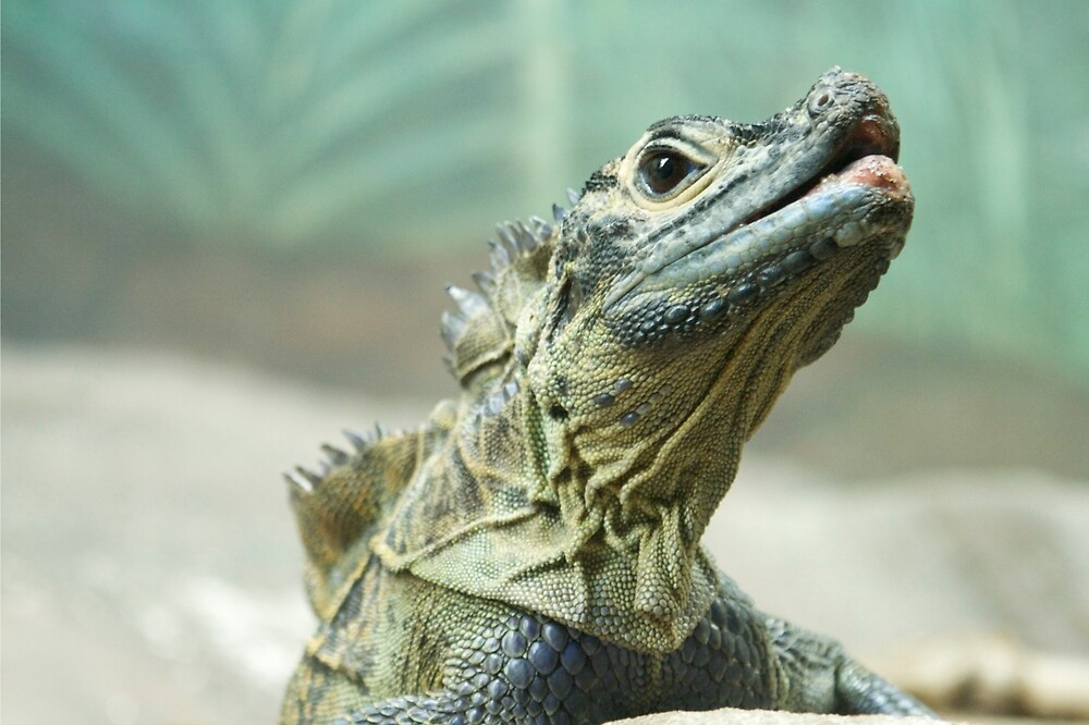 Epic Lizard  by sarah brown