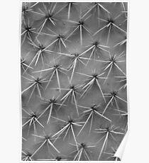 Cactus 5735 Poster