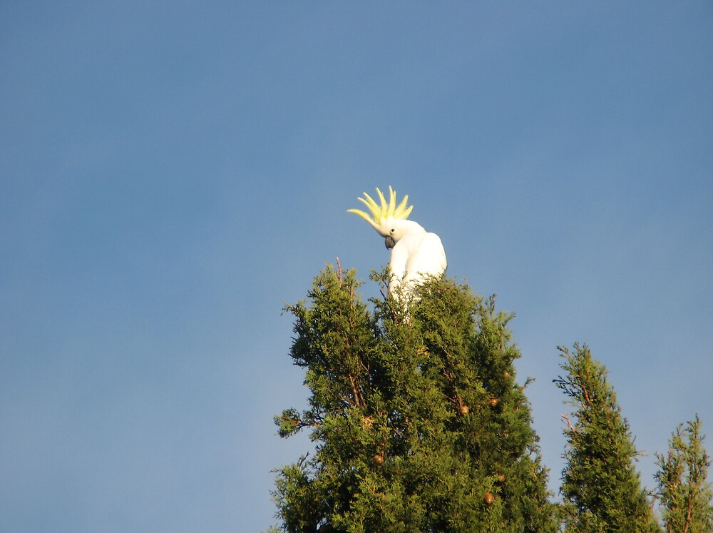 Top of the tree. by Kevmac