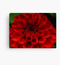 Bright Red flower Macro Canvas Print