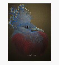 Portait oiseau bleu Photographic Print