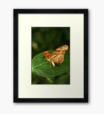 Before Flight Framed Print