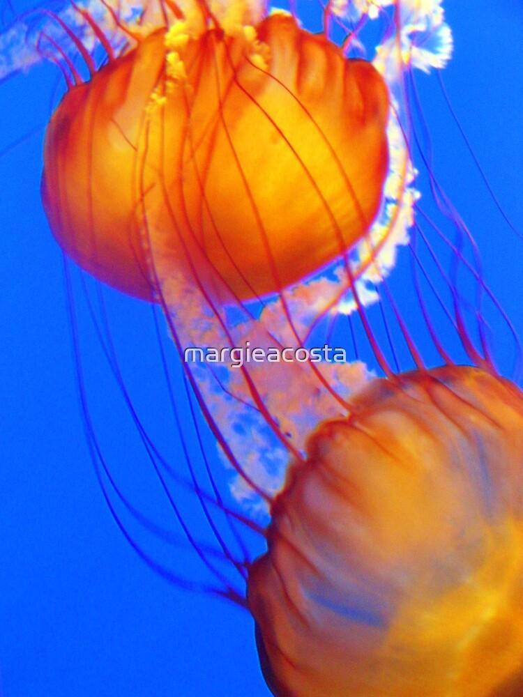 Monterey Bay Aquarium by margieacosta