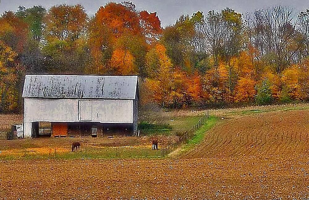 Ohio Horse Farm by terrylazar