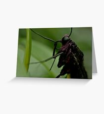 Purple Pollen Greeting Card