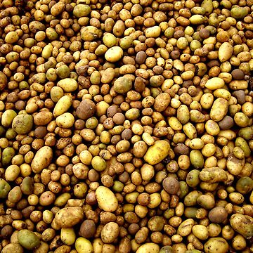 potatoes by pautrat