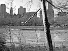 Central Park Pond by Dan Perez