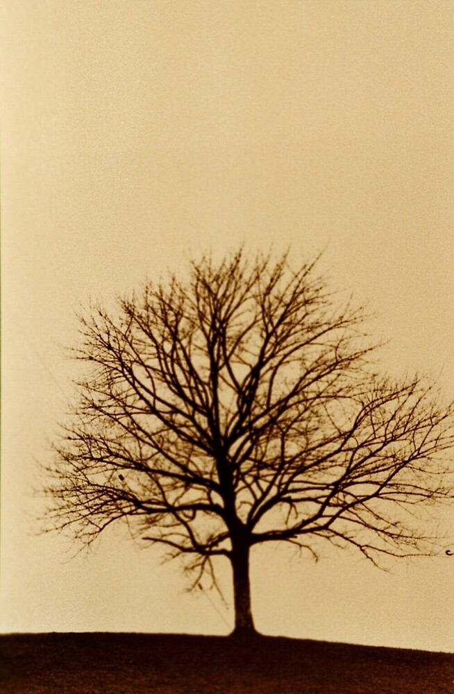 Tree by ducnly