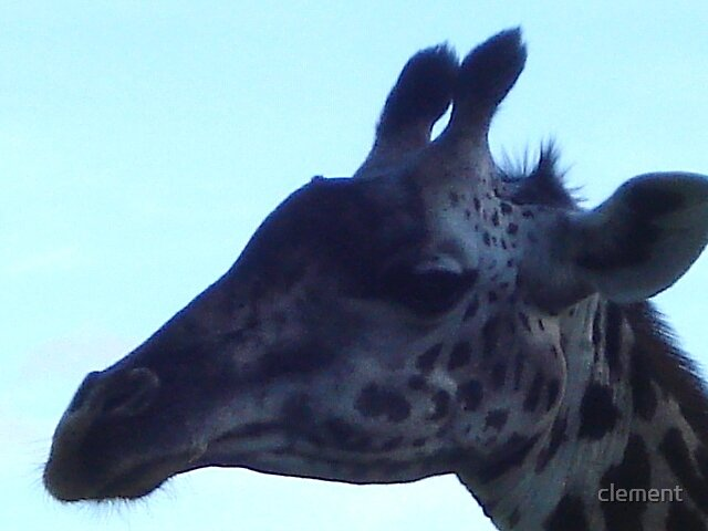 Giraffe upclose by clement