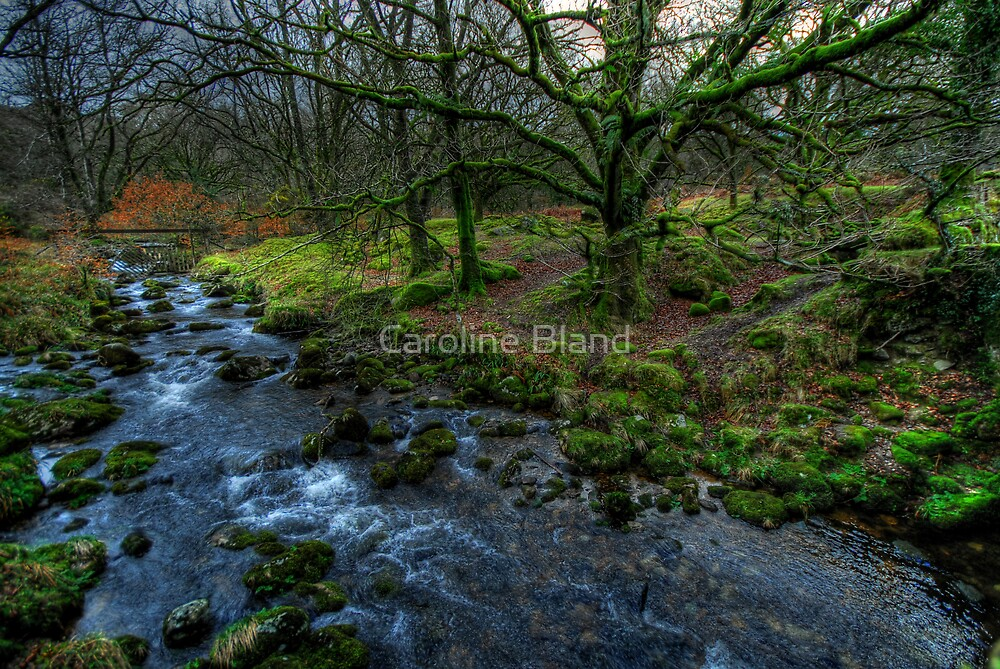 Dartmoor Stream by Caroline Bland