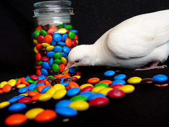 Mmmm... I'm So Sweet - White Dove - NZ by AndreaEL