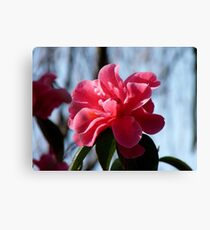 Nature Painted Her Pink - Camellias - NZ Canvas Print