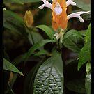 Flower Power by SirDidymus