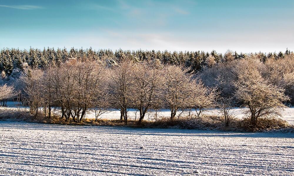 Frozen Trees by Kofoed