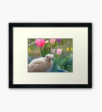 I Have A Sparkling Personality! - White Dove - NZ Framed Print