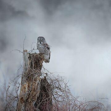 Gloomy Sunday  by locustgirl