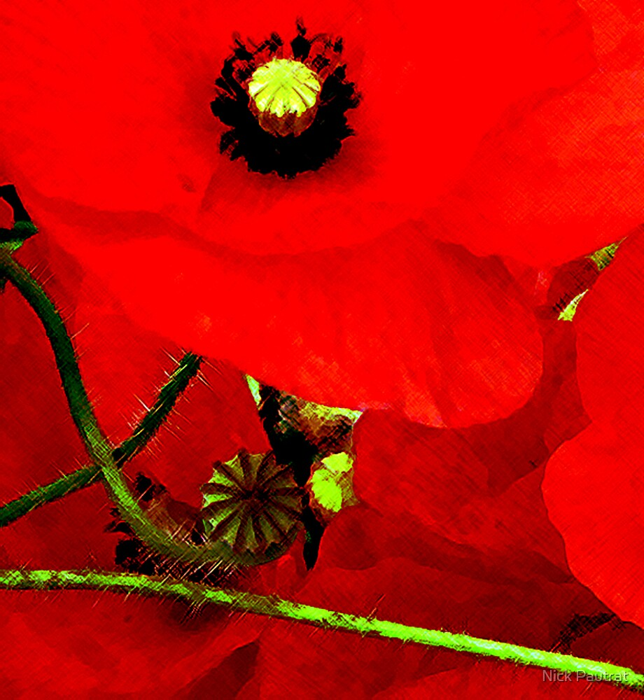 Poppy close up by Nick Pautrat