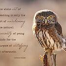 Teacher - Owl Gift by Tracy Friesen