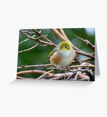 Aww...Don't Be Sad... We Will Be Back - Silver-Eye - NZ Greeting Card