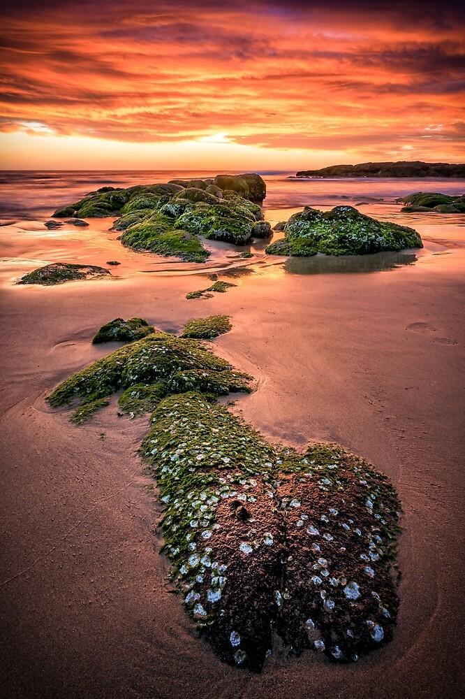 Islands of Green by bryanstalder
