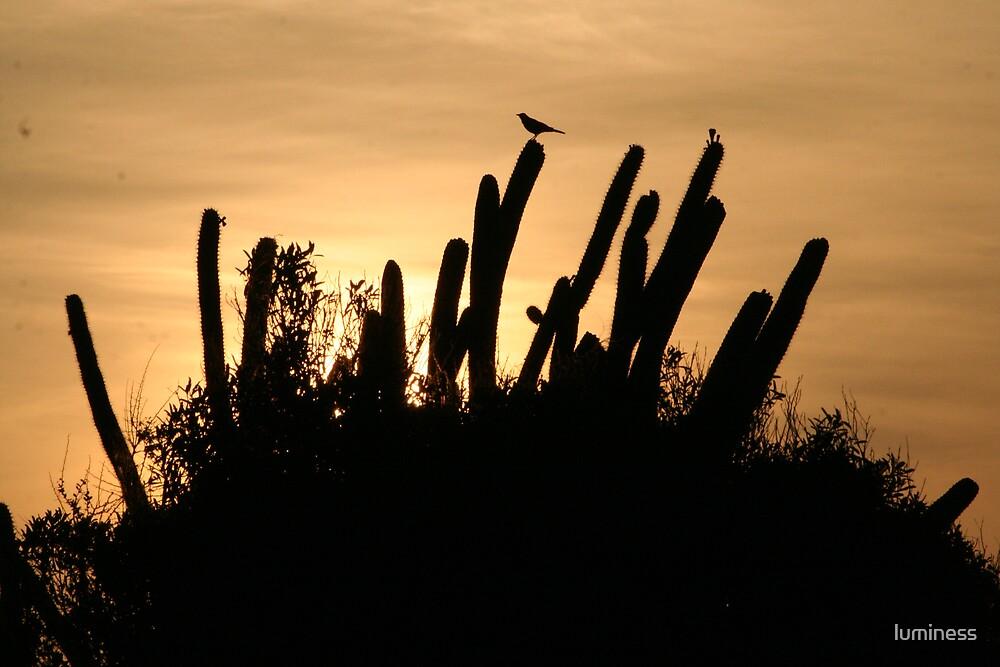 cactus sunrise by luminess