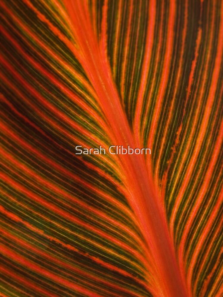 Canna Lily by Sarah Clibborn