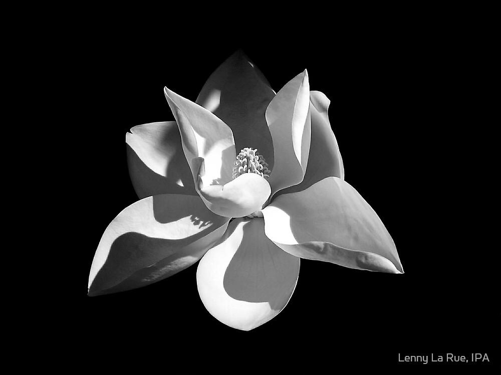 magnolia by Lenny La Rue, IPA