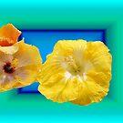 Artistic Hibiscus by Margaret Stevens