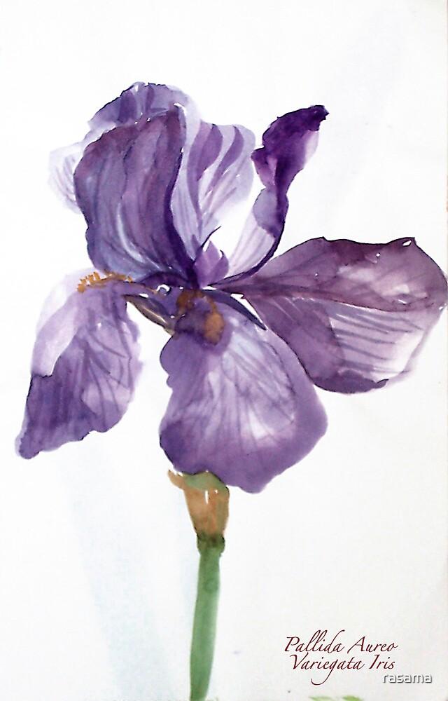 Iris Pallida by rasama