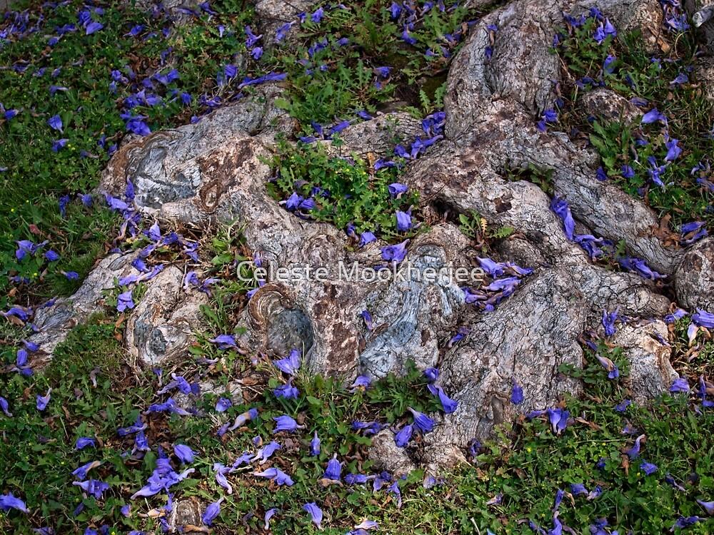 Jacaranda blossoms scattered among the roots by Celeste Mookherjee