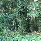 Rainforest by Margaret Stevens