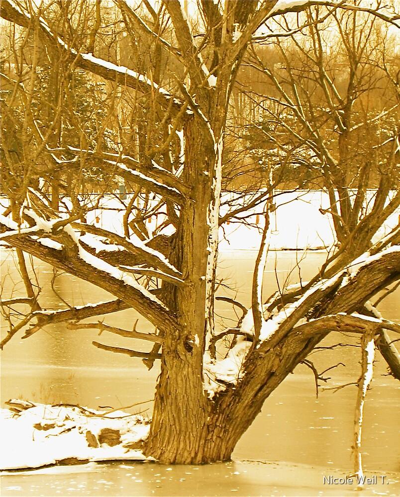 Snowy Tree by Nicole Weil T.