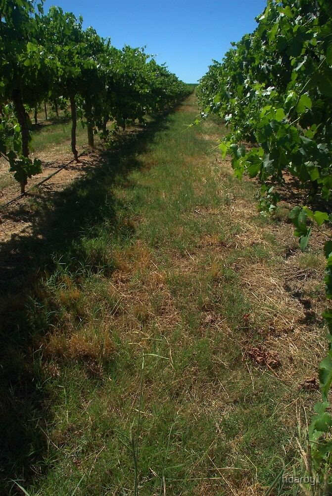 along the grape vines by ndarby1