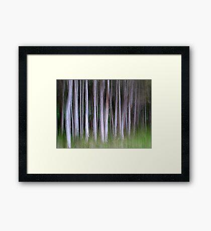 Paperbarks Framed Print