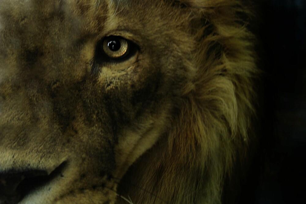 King Aslan by susannahg