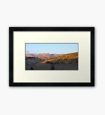 Colorado Aspens at Sunset in Fall Framed Print