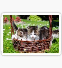 Furry kitten  Sticker