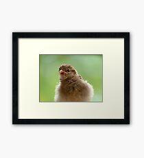 Ummm.. Where Is The Syringe? - Sparrows - NZ Framed Print