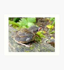 I'm A Beautiful Little Ugly.. Dunnock Hedge Sparrow - NZ Art Print