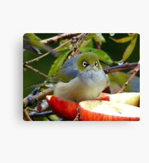 Merry Christmas To You...Silver-Eye - NZ Canvas Print